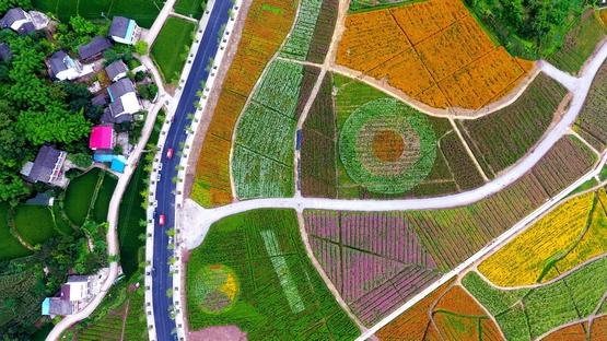 让田野生长希望 来自渠县现代农业发展的报告【上】