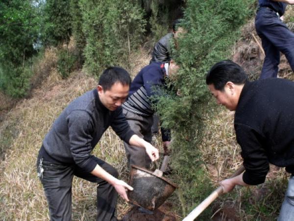渠县巨光乡动员全民参与植树造林活动